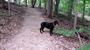 Dog on hiking trail. Avoid gym